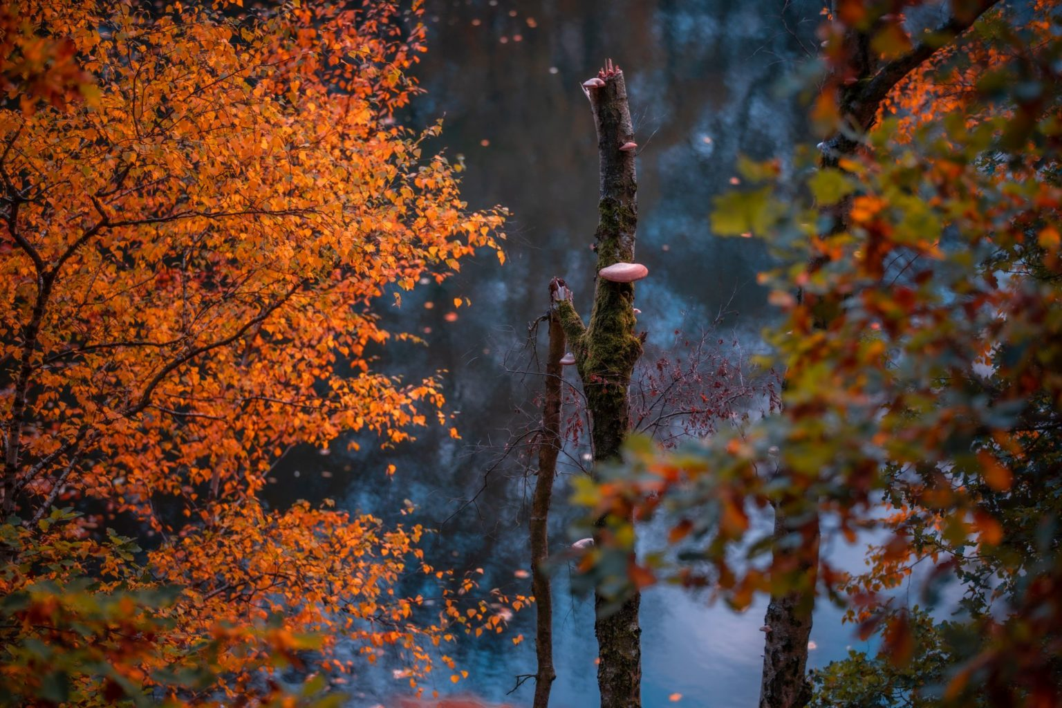 Natur-Wald-Velpker-Schweiz-14