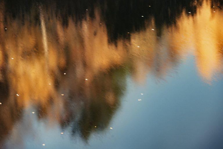 Natur-Wald-Velpker-Schweiz-17