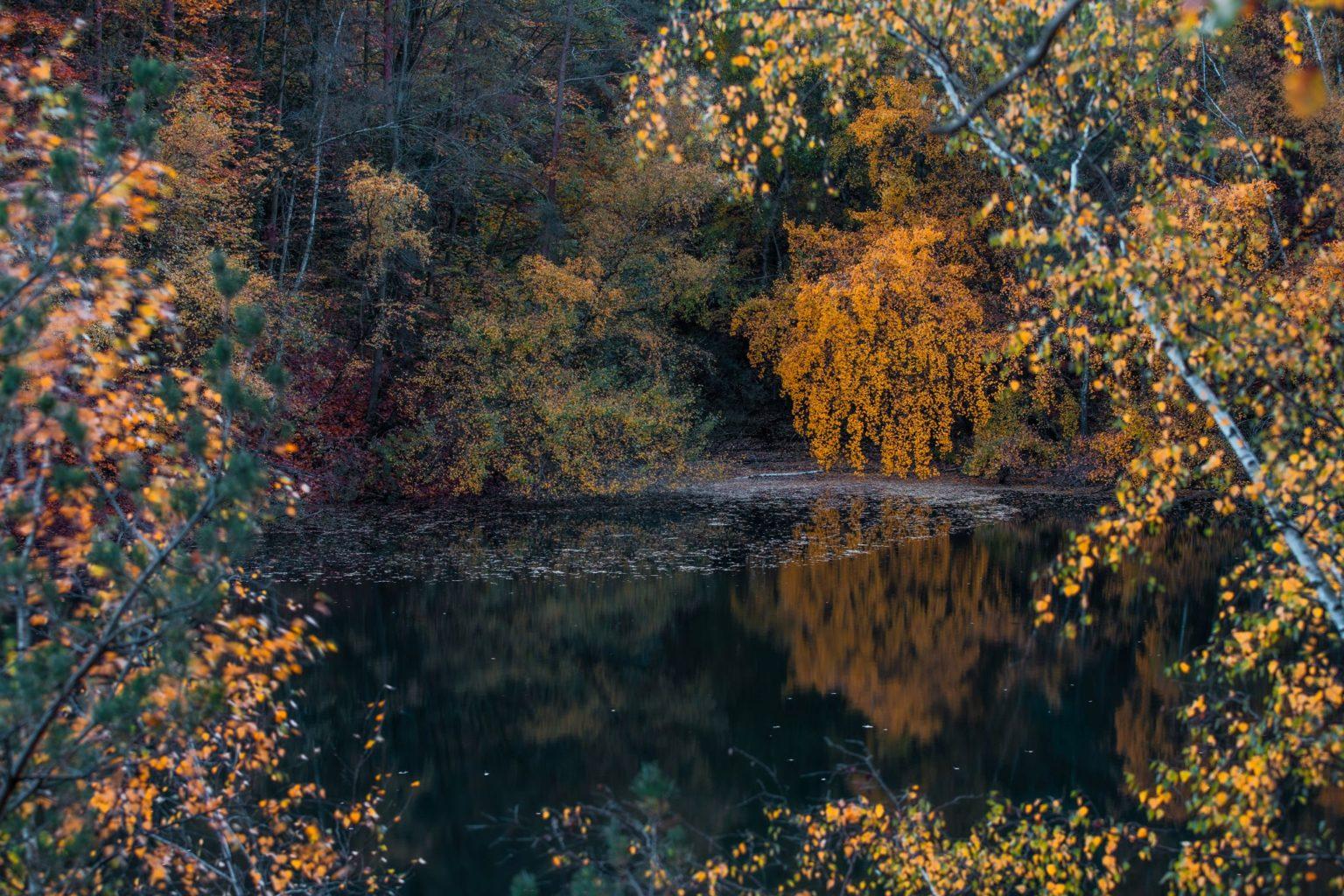 Natur-Wald-Velpker-Schweiz-21