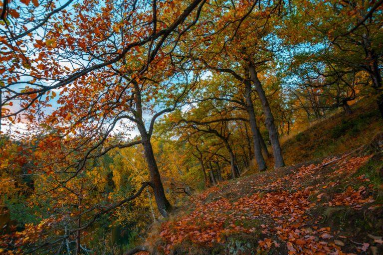 Natur-Wald-Velpker-Schweiz-26