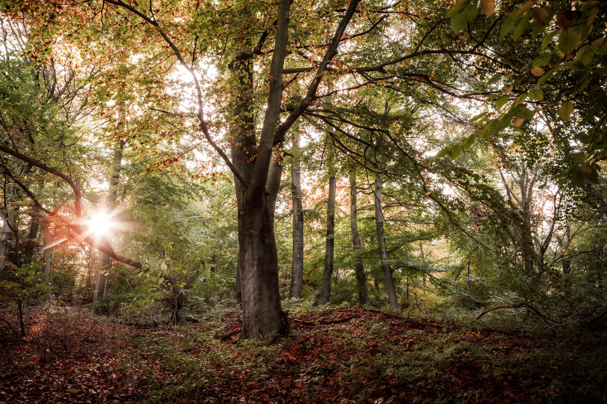 Der Dorm im Naturpark Elm-Lappwald